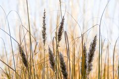 Wild flower grass with blurry background. On a sunny evening Stock Photo