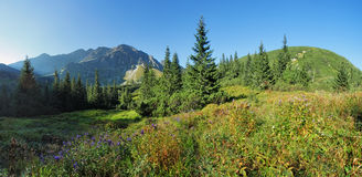 Wild Flower in green forest mountain, Tatras, Slovakia royalty free stock photography