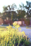 Wild flower on a green meadow in spring evening sunset hour Stock Images