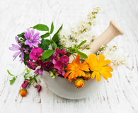 Wild flower and herb leaf in mortar Royalty Free Stock Image