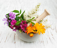 Wild flower and herb leaf in mortar Stock Images