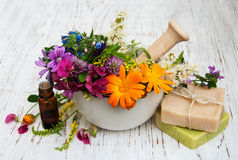 Wild flower and herb leaf in mortar Stock Image