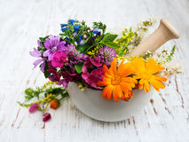 Wild flower and herb leaf in mortar Stock Photography