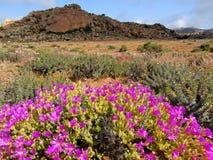 Wild flower landscape Stock Photo