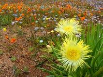 Wild flower landscape Stock Photography