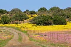 Wild flower landscape Royalty Free Stock Photo