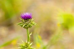 Wild flower macro Royalty Free Stock Image