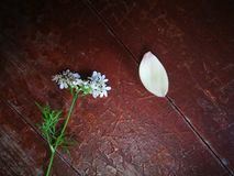 Wild flower and magnolia pedal lying on wooden table Royalty Free Stock Image
