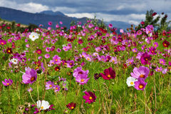 Wild flower meadow royalty free stock image