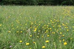 Wild Flower Meadow. stock photo