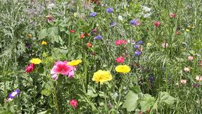 Wild flower meadow stock video footage