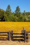 Wild Flower Meadow and Fencing Stock Image