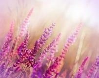 Wild flower (meadow flower) Royalty Free Stock Photo
