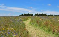 Wild Flower Meadow in France Stock Photo