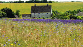 Wild Flower Meadow in France Royalty Free Stock Photography