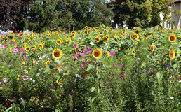 Wild Flower Meadow in Germany Stock Photography