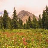 Wild Flower Meadow With Gusty Peak Stock Photos