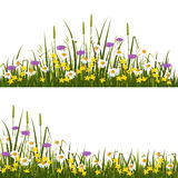 Wild flower meadow Stock Photography