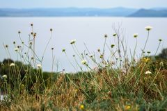 Wild flower meadow and lake Balaton royalty free stock photography