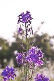 Wild flower in meadow Stock Photos