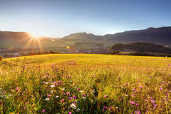 Wild flower meadow in mountain at sunrise royalty free stock images