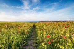 Wild Flower Meadow Stock Image
