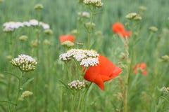 Wild Flower Meadow, Sharp Sheaf Royalty Free Stock Photos
