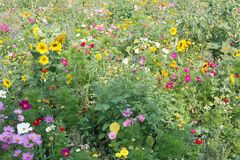 Wild flower meadow royalty free stock photography
