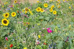 Wild flower meadow stock photo
