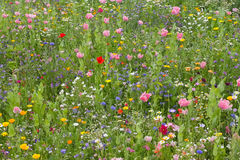 Wild flower meadow Stock Photos