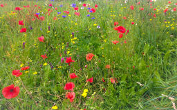 Wild Flower Meadows Stock Images