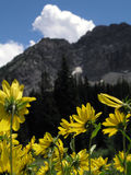 Wild flower mountain vertical Stock Photography