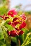 Wild flower Royalty Free Stock Photos