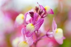 Wild flower pastel wonderland. Selective focus Royalty Free Stock Photography