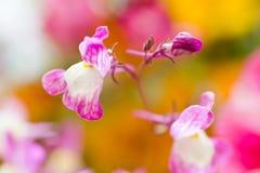 Wild flower pastel wonderland. Selective focus Stock Image