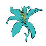 Wild flower picture design vector illustration