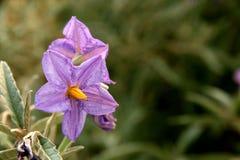 Wild flower Stock Images