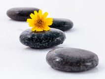 The wild flower on river stones spa treatment scene isolate on w. Hite background zen like concepts Stock Images