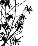 Wild flower silhouette Royalty Free Stock Photos