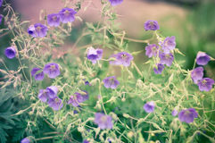 Wild flower with vintage filter unfocused Stock Photo