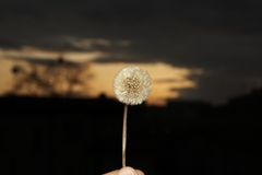 Wild flower vs sunset Stock Images