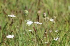 Wild floweres in the field Royalty Free Stock Photo