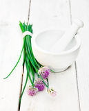 Wild flowering Chives. And a mortar with pestle on a white wooden background Royalty Free Stock Photo