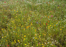 Wild flowering meadow Stock Photo