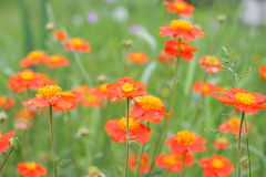 Wild flowers. The big image of Summer wild flowers Stock Photography