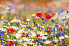 Wild flowers. Abundance of blooming wild flowers on the meadow at spring time stock photography