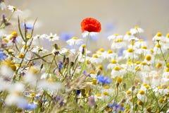 Free Wild Flowers Stock Photo - 22621660