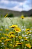 Wild Flowers. Close-up of wild flowers in a colorful countryside scenery Royalty Free Stock Photo