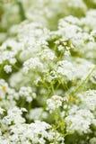 Wild flowers Stock Image