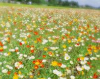 Wild Flowers Royalty Free Stock Photography